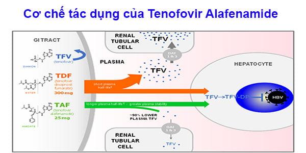 Cơ chế tác dụng của Tenofovir Alafenamide